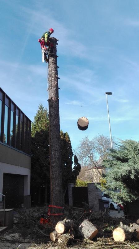 Rizikové kácení stromolezeckou technikou